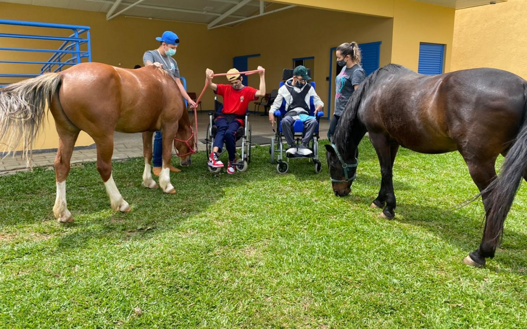 A escolha do cavalo para Equoterapia!