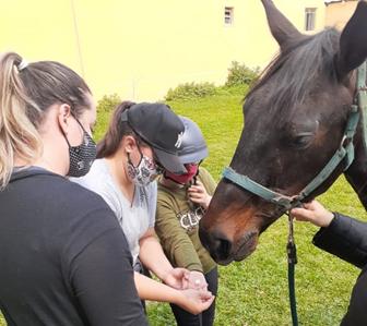 O treinamento do cavalo de equoterapia e a prática segura